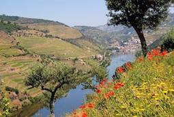Das Dourotal ist die Wiege des Portweins, reich an Kultur und lockt mit frühsommerlichen Temperaturen. Foto: Nicko Cruises